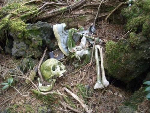 Die skurrilsten Orte der Welt: Der Selbstmord-Wald in Japan, Aokigahara