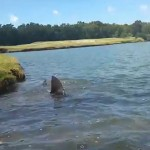 Haie im Golfteich